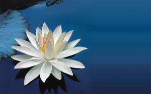 white-water-lily-flower-lake-wallpaper-1920x1200-750x469